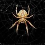 Паучья сеть в наследство