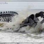 Доисторические животные в современных морях