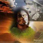 Необъяснимое или кого бережет Бог а кого Дьявол