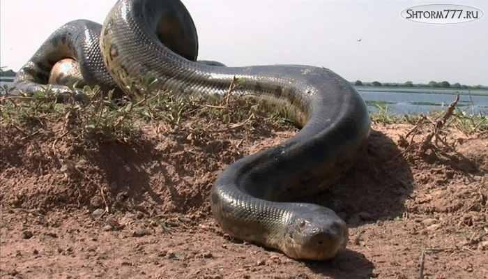 Гигантский змей-1