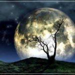 Все о луне