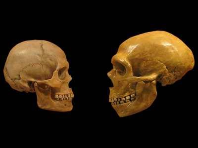 Неандертальцы - это