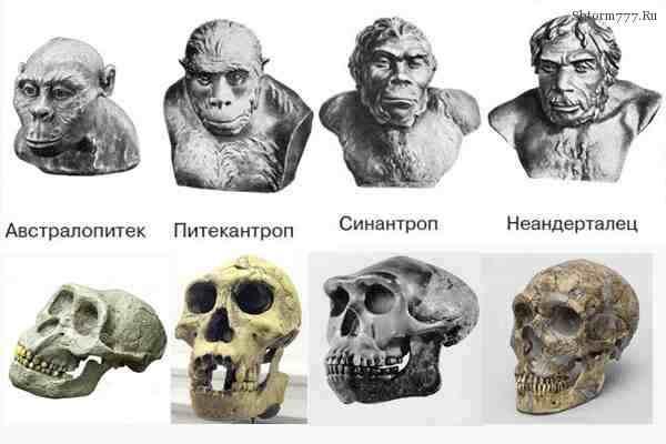 Питекантроп. Предок человека? Новые открытия
