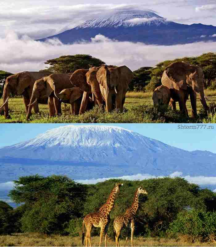 Гора Килиманджаро-2