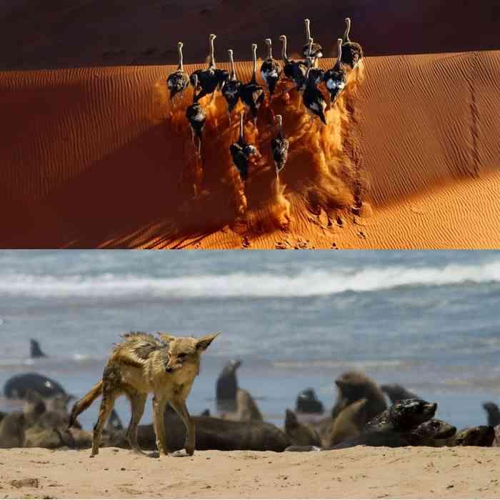 Берег Скелетов, Намибия-3
