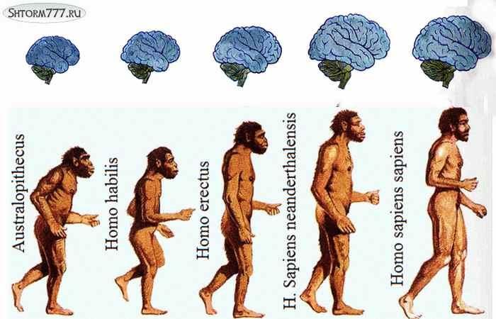 Homo habilis-4