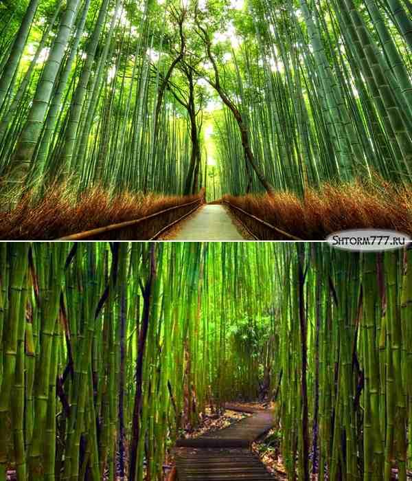 Лощина черного бамбука, Китай-3