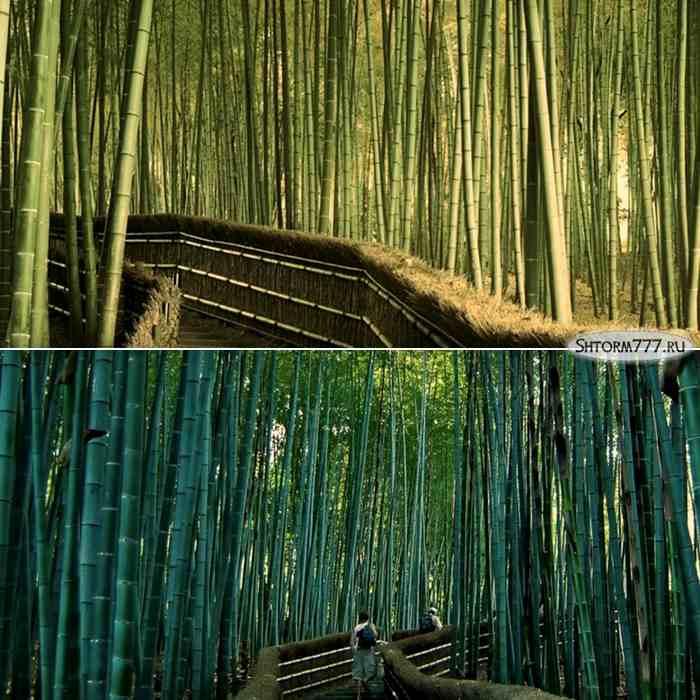 Лощина черного бамбука, Китай-4