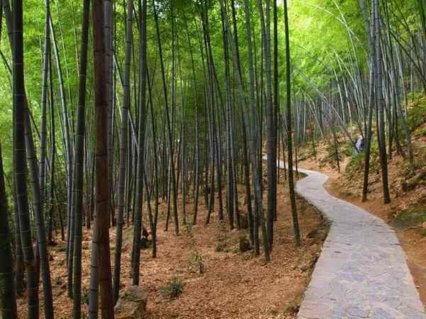 Лощина черного бамбука, Китай-5