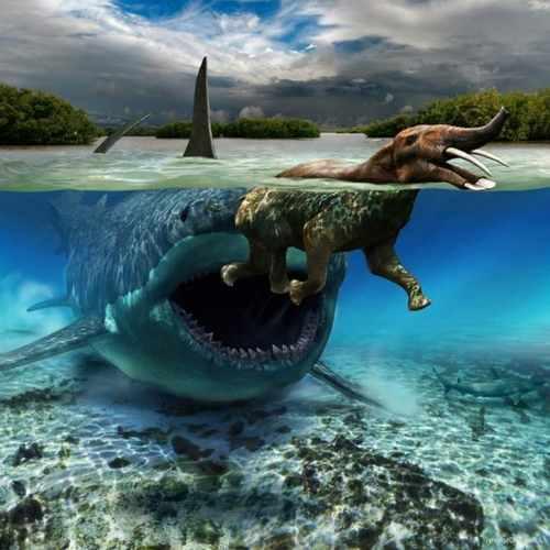 Мегалодон, акула-1