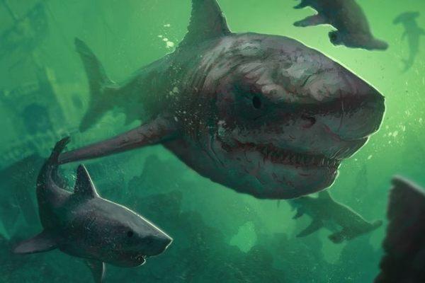 Мегалодон, акула-3