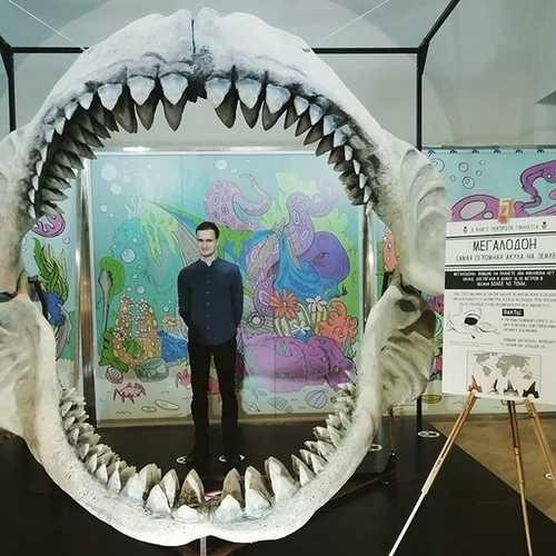 Мегалодон, акула-4