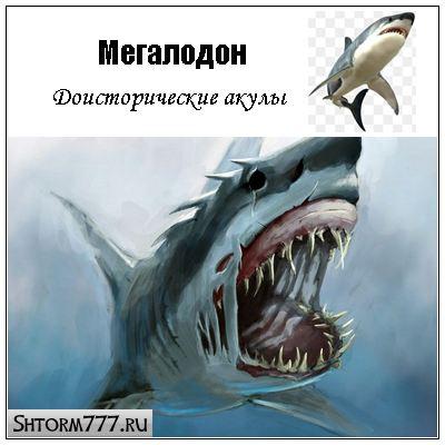 Мегалодон, акула