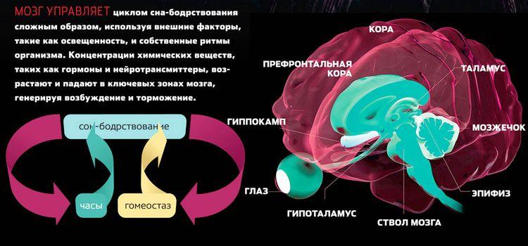 Фазы сна-3