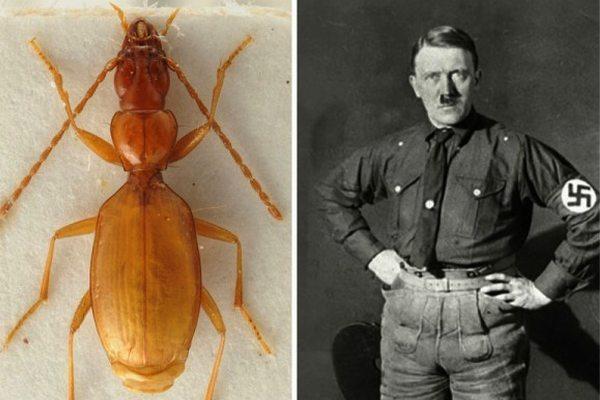 Интересные факты о Гитлере-2