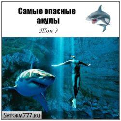 Самые опасные акулы. Топ 3