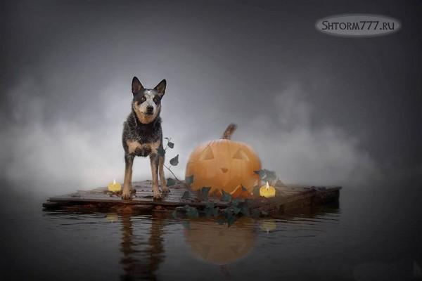 Призраки домашних животных-1