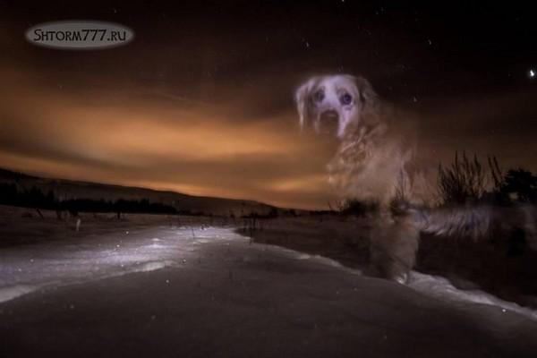 Призраки домашних животных-2