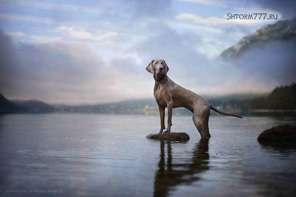 Призраки домашних животных-3