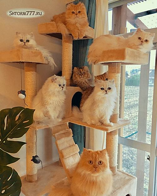 Интересные факты о кошках. Топ 30 (1)