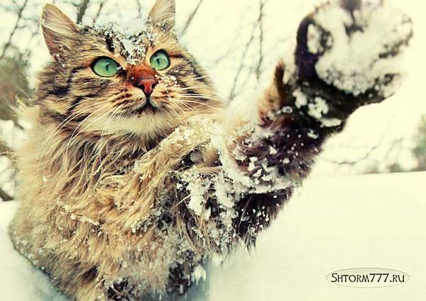 Интересные факты о кошках. Топ 30 (2)