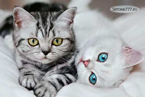 Интересные факты о кошках. Топ 30 (3)