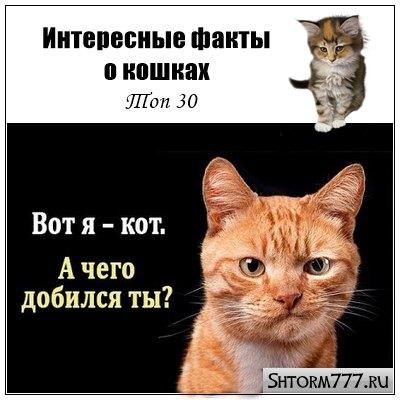 Интересные факты о кошках. Топ 30
