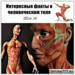 Интересные факты о человеческом теле