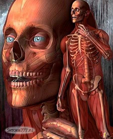 Интересные факты о теле человека-2
