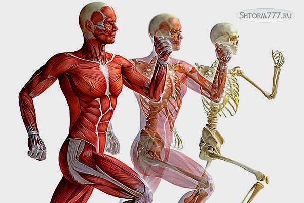 Интересные факты о теле человека-3