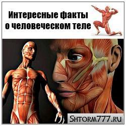 Факты о человеческом теле