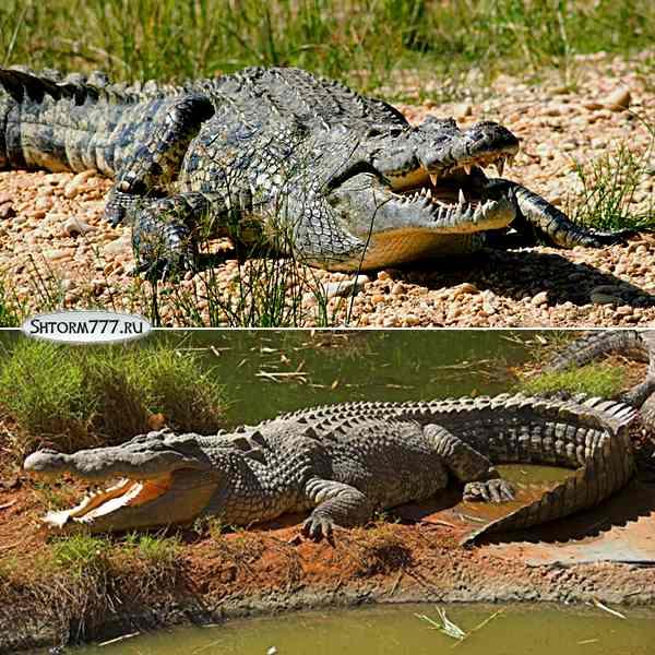 Факты о крокодилах-2