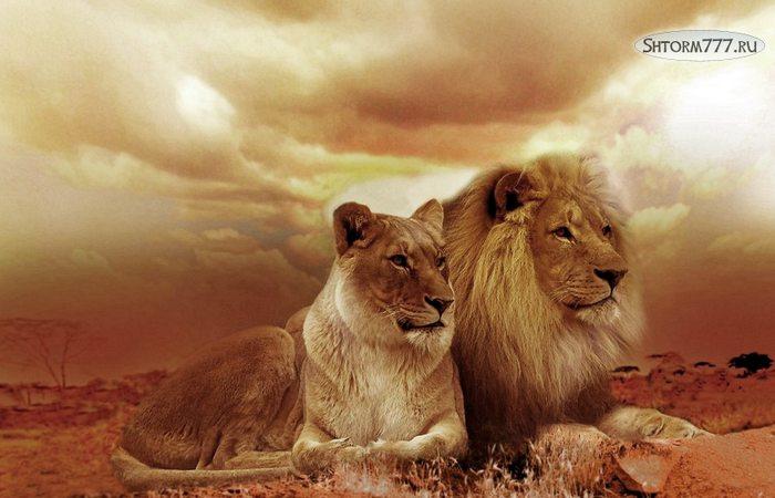 Факты о львах-1