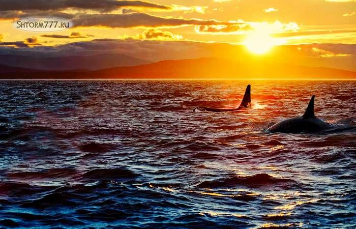 Интересные факты о океане. Топ 20 (1)
