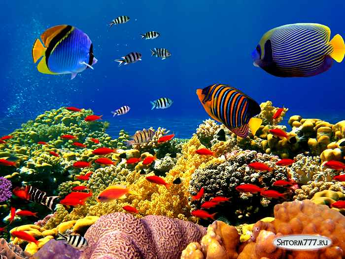 Интересные факты о океане. Топ 20 (2)