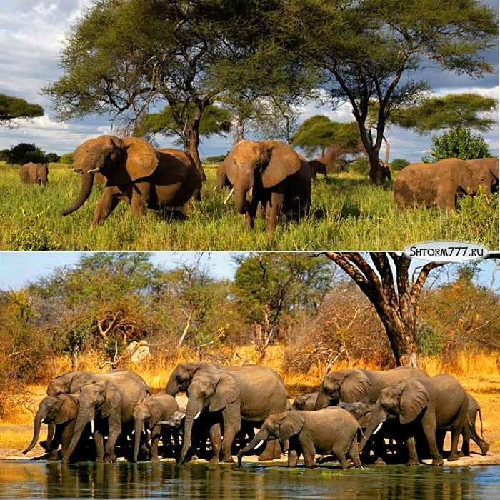 Факты о слонах-3