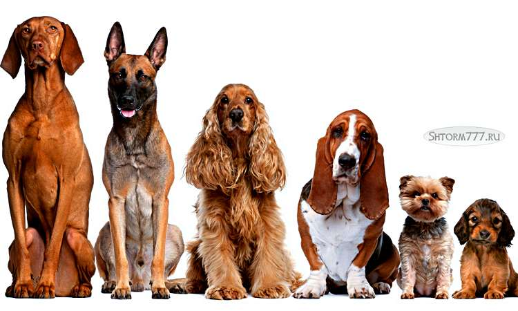 Факты о собаках-1