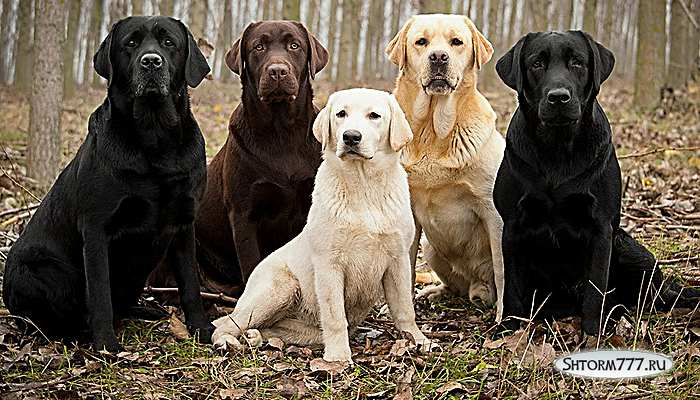 Факты о собаках-3