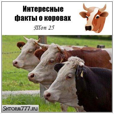 Факты о коровах