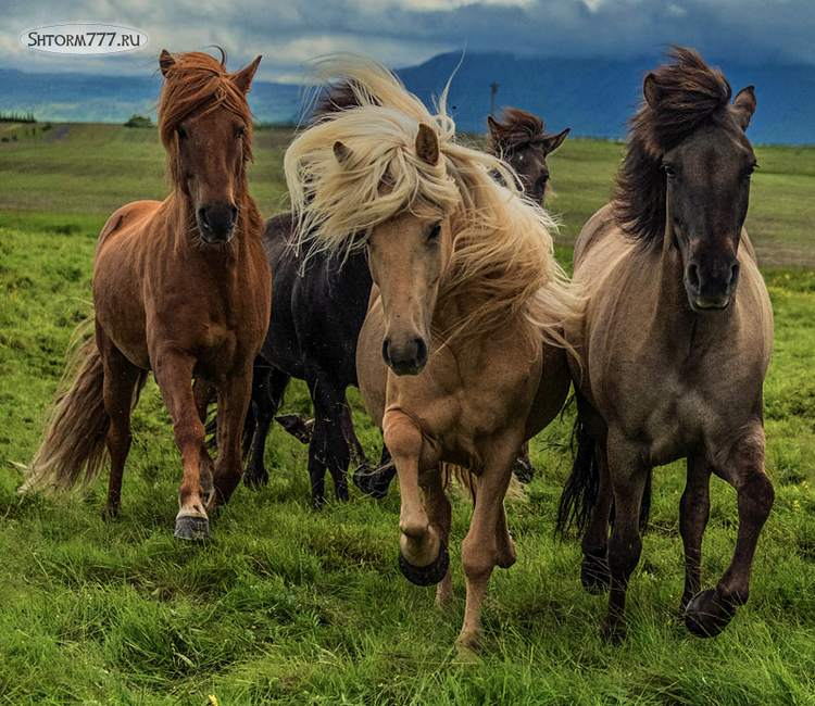Факты о лошадях-1