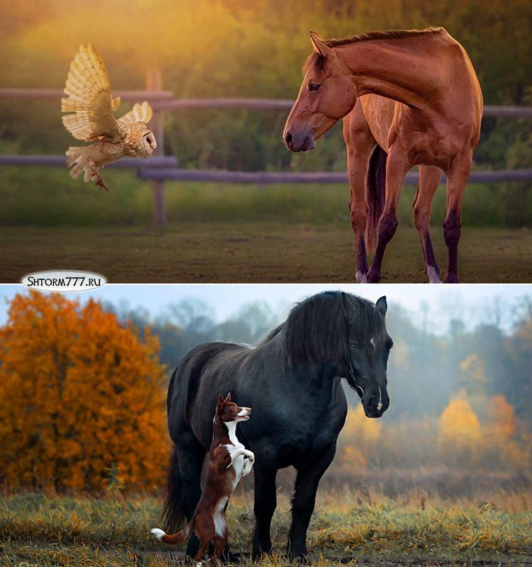 Факты о лошадях-2