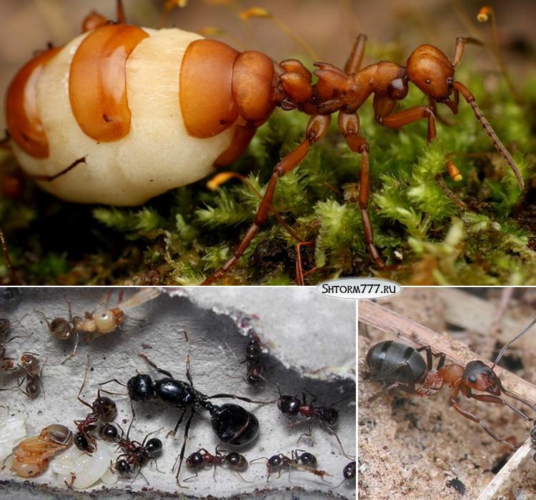 Топ 30 интересных фактов о муравьях-1