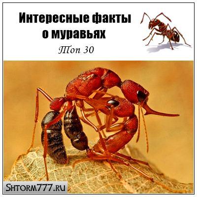 Интересные факты о муравьях. Топ 30