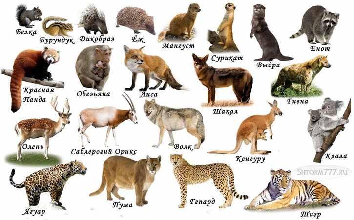 Интересные факты про животных