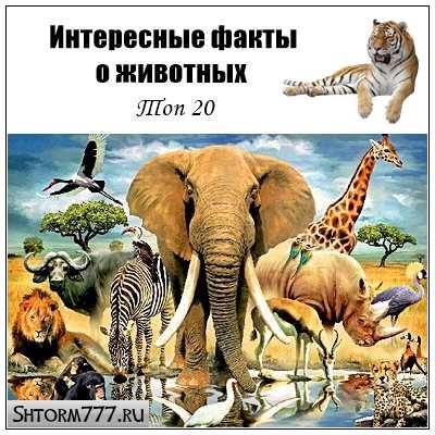 Интересные факты о животных. Топ 20