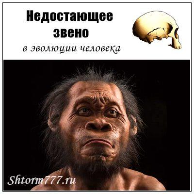 «Недостающее звено» в эволюции человека