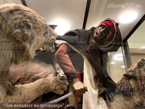 Лев нападает на дромадера